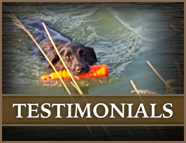 Southern Flight Retrievers Testimonials